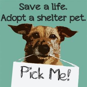 save_a_life_adopt_a_shelter_pet-bergencountyanimalshelter